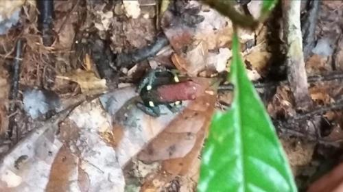 Frog in middle, very small