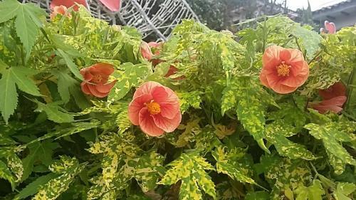 Pretty flowers at Botanical Gardens