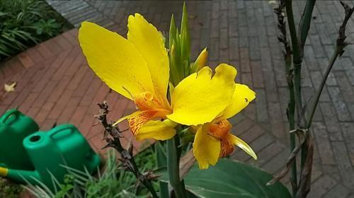 Pretty flower at Botanical Garden