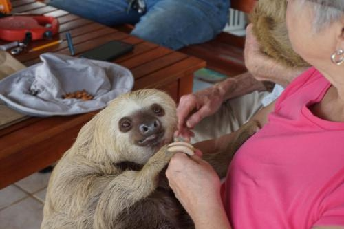 Lindie feeding almonds to a two-toed sloth.