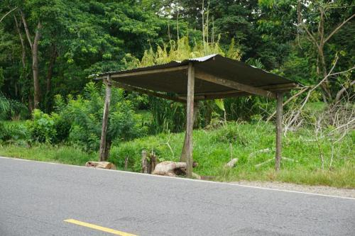 Bus stop/stall