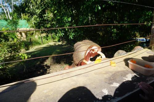 Vanessa the hippo feeding time