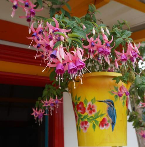 Ballerina Flowers