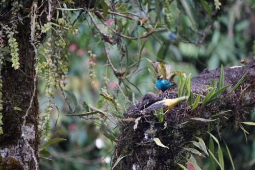 Pretty bright blue bird with yellow beak