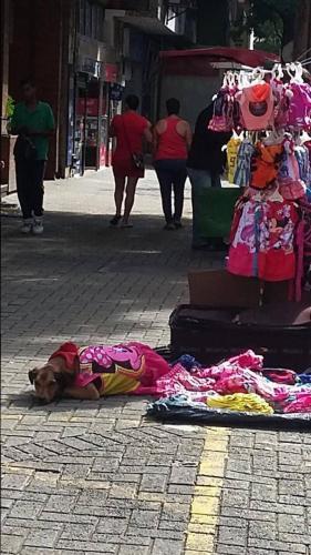 My favorite, dog clothes vendor