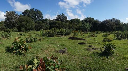 Field to Petroglyphs