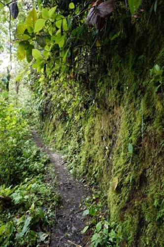 Hiking trail, moss covered side, very pretty