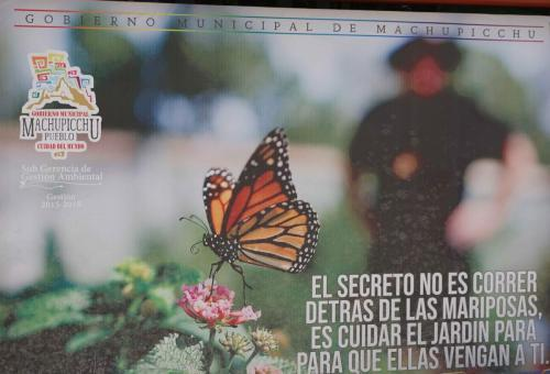 The secret is not running behind the butterflies. It is to take care of the garden so that they come here.