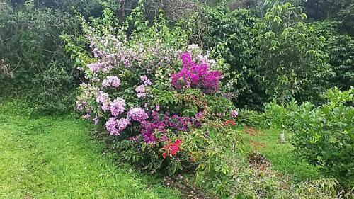 Several different  bougainvilleas and other flowers
