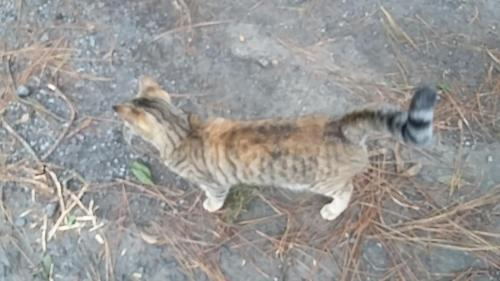 Beautiful feral cat that we fed. One of about 22 feral cats; one of the few that will approach humans.
