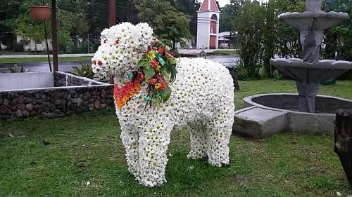 Lamb made of flowers