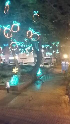 Fruit lights in trees