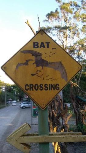 Bat Crossing