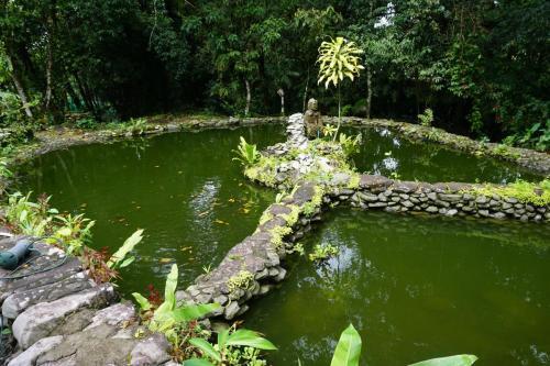 Tilapia pond at Lita's