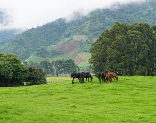 Horse farm in Volcan