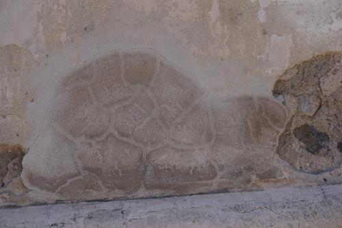 Patch in Granada Wall Looks like a Turtle