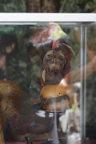 Shrunken Head supposedly 170 years old