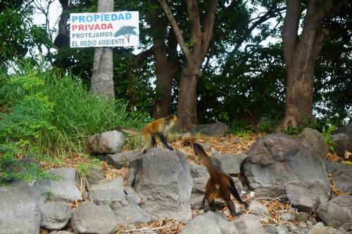 Spider Monkeys  Private Property Sign