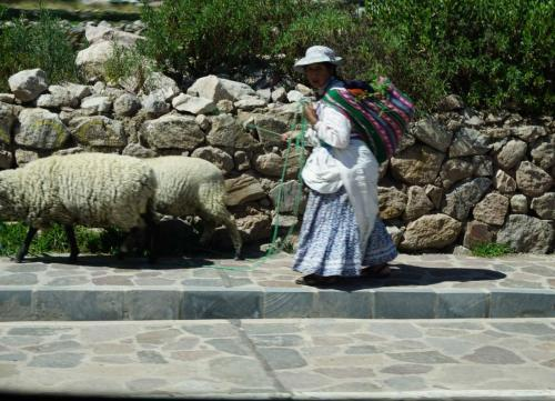 Woman with sheep in town
